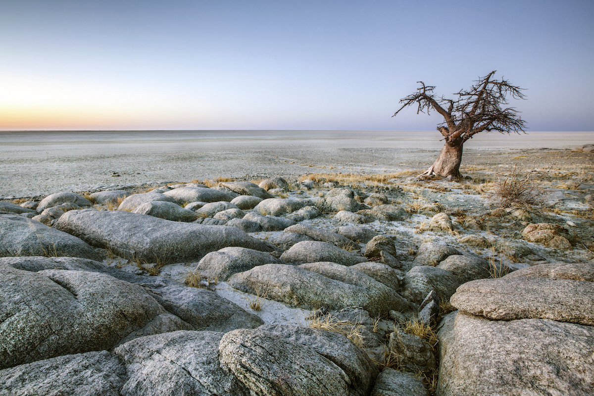 Lone Baobab tree