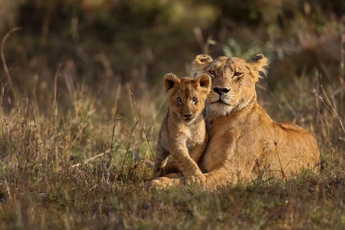 Winning a South African Photo Safari
