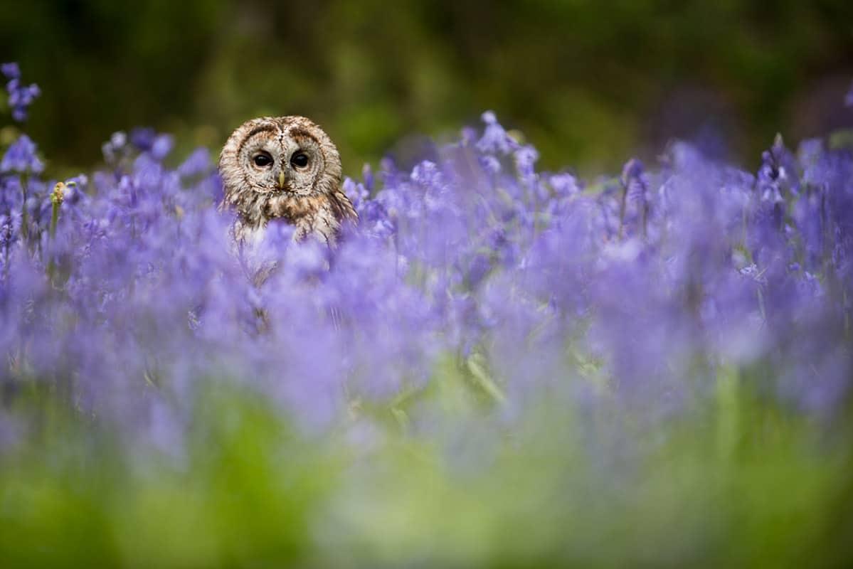 tawny Alan Hewitt Photographer