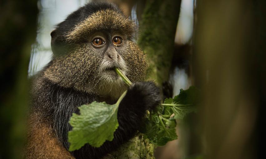 close shot of a monkey