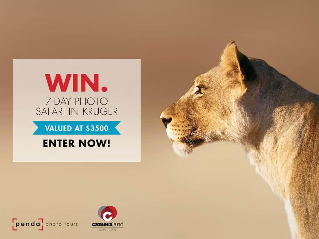 Win a free safari