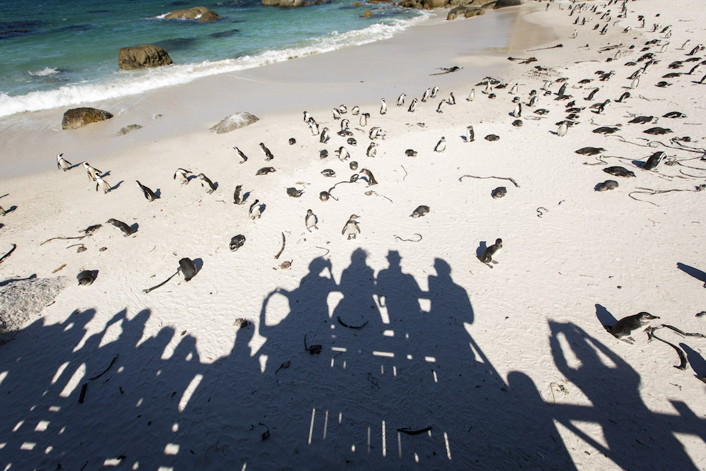 Penda workshop on the beach with penguins