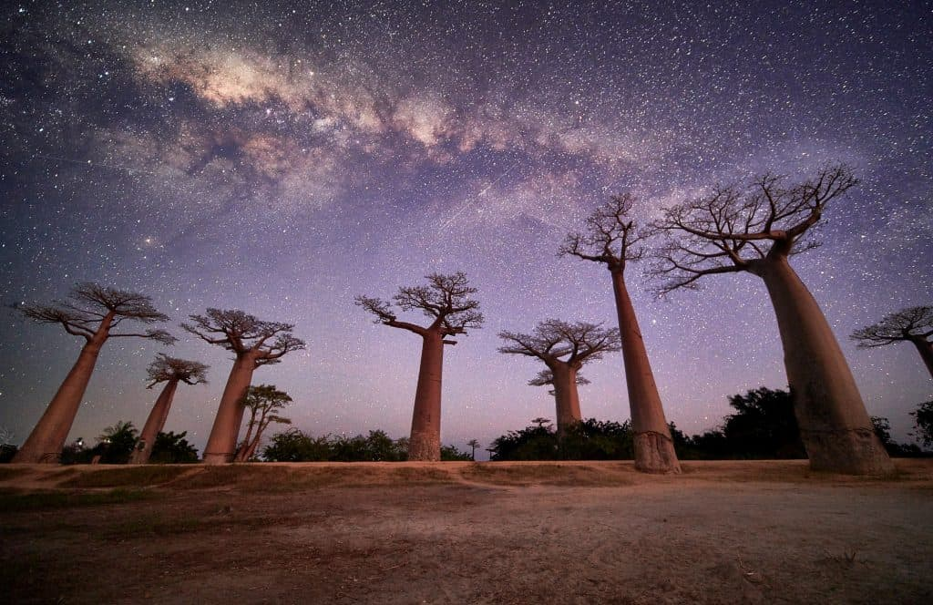 Astrophotography and Baobabs at night by Emil von Maltitz