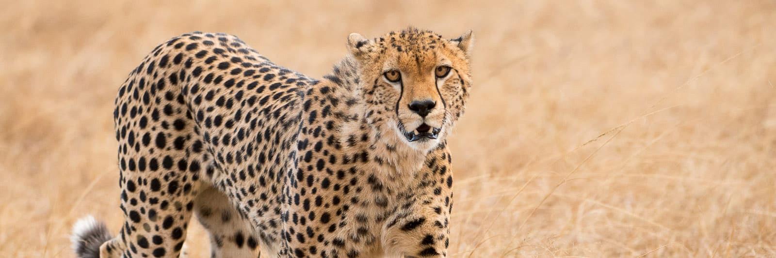 Ethics in Wildlife Photography