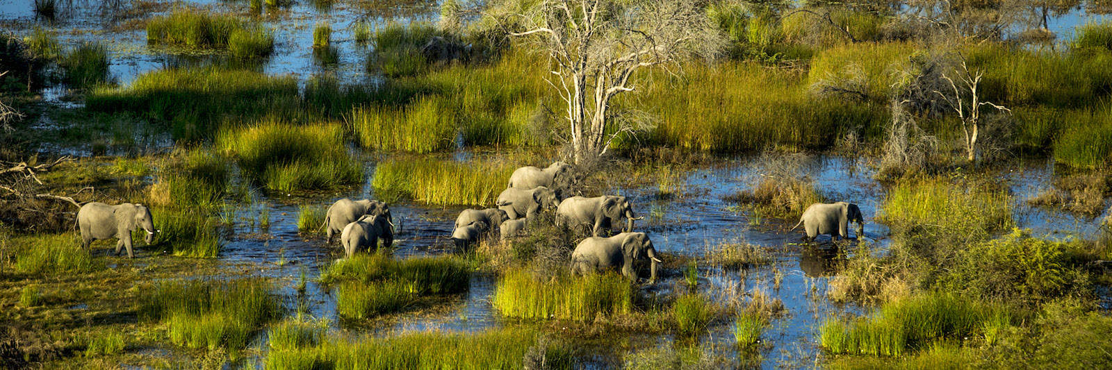 10 Quick Facts About Botswana (that will make you want to go there)