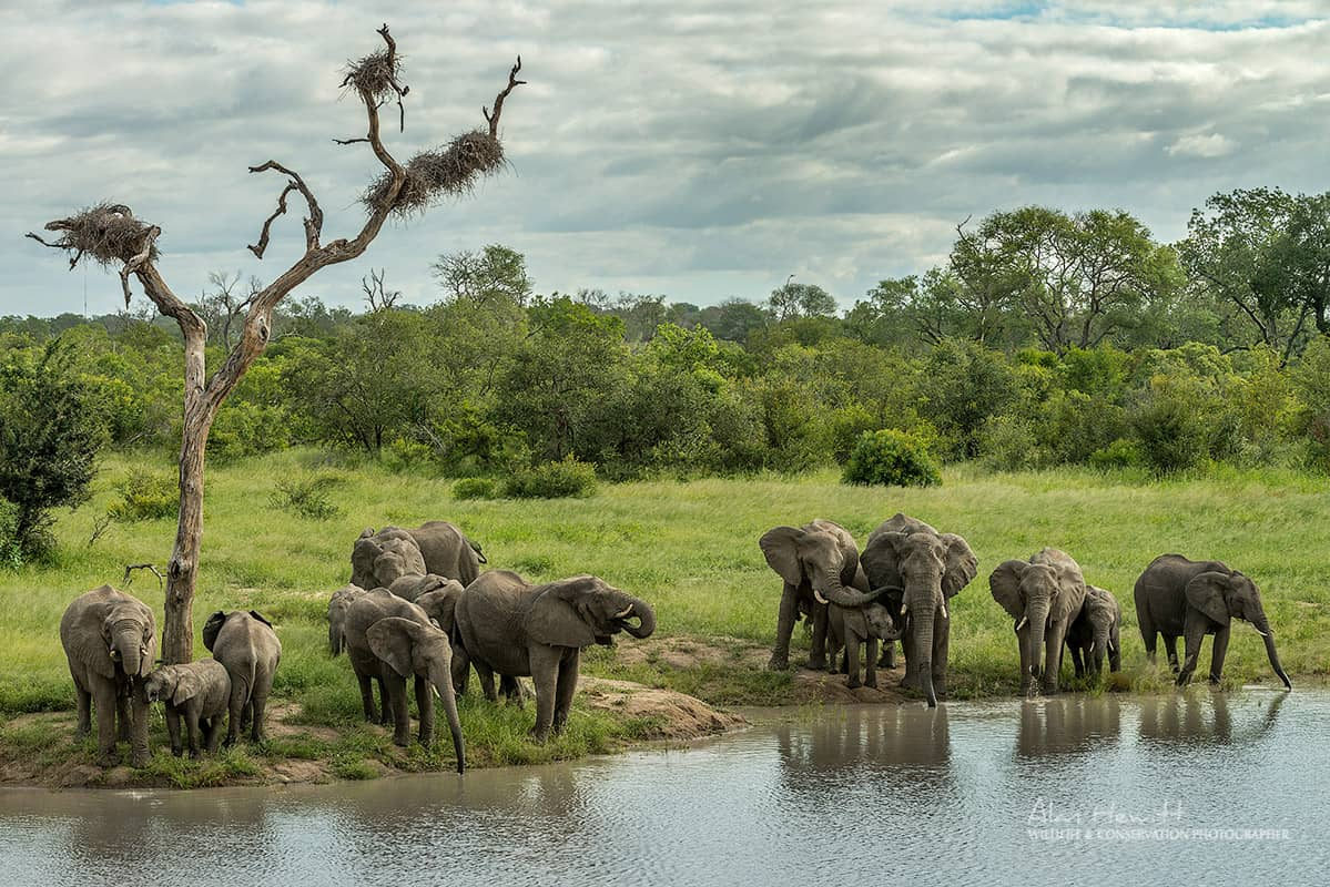 Elephants during safari