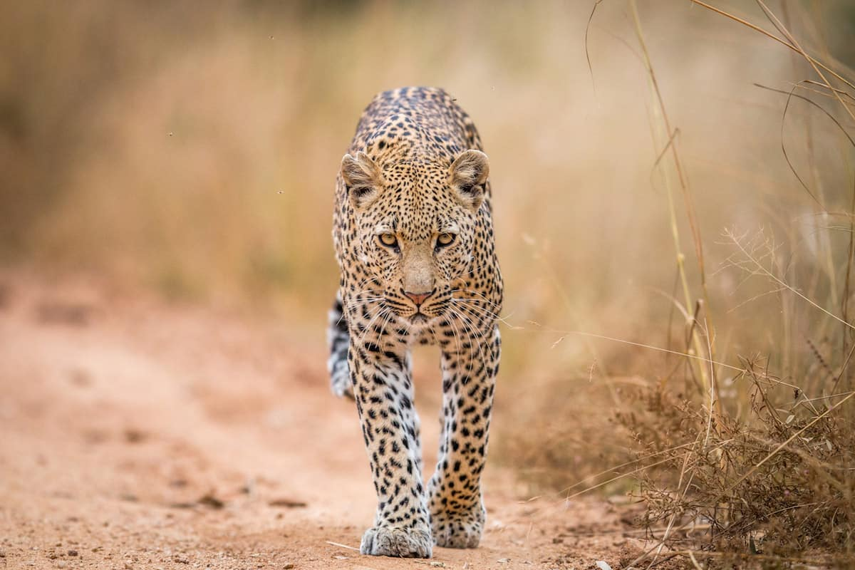 iStock 592671734 copy - 7 Best Destinations for Photo Tours in Africa