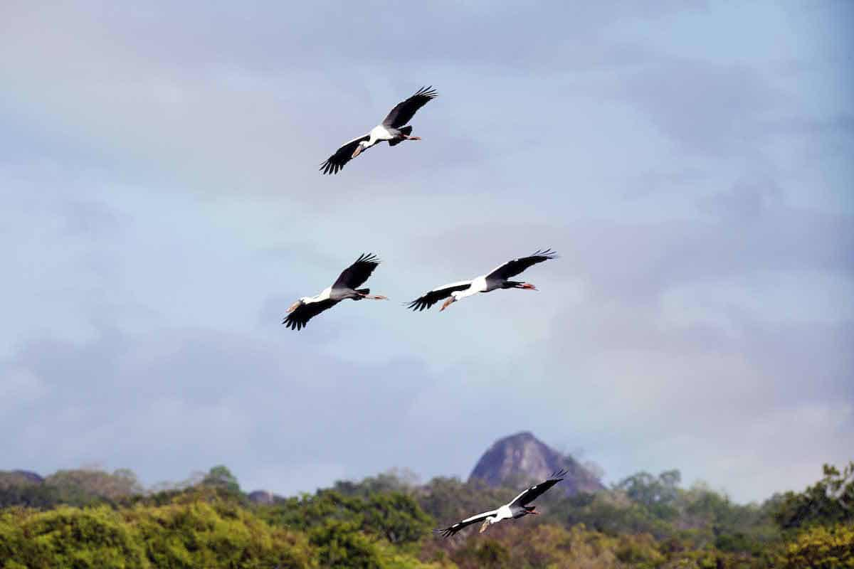 Sri Lanka birds