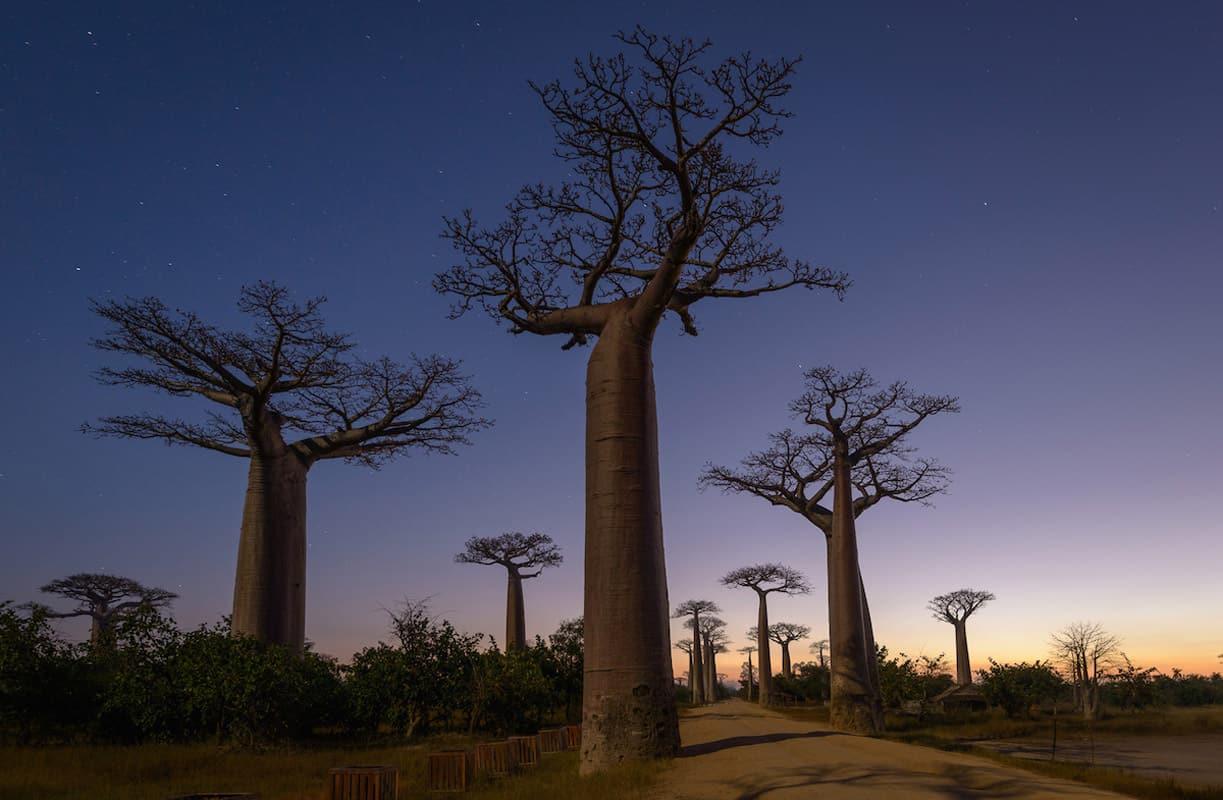 Baobab Alley, unique Madagascar
