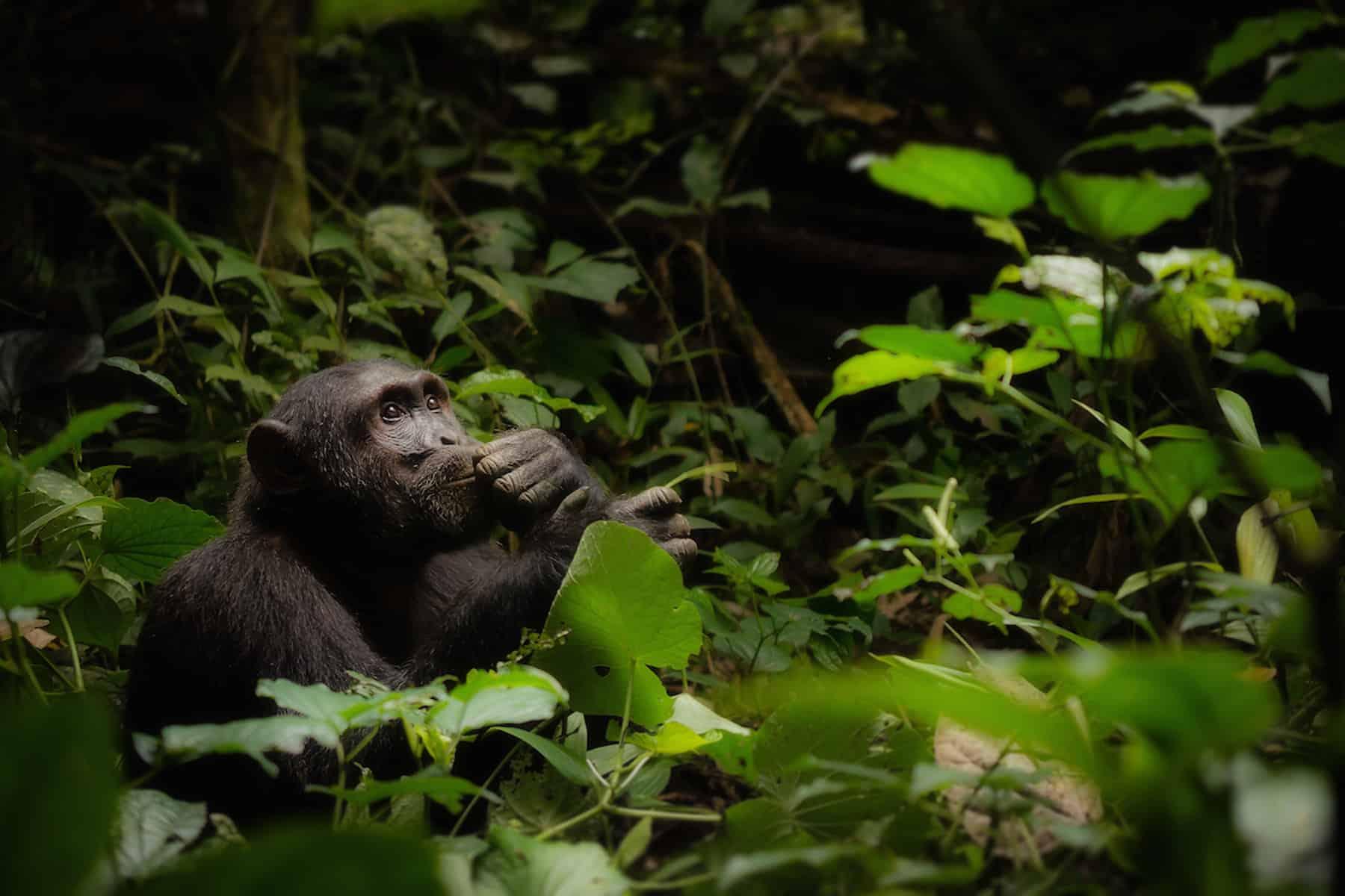 Uganda Wildlife Photography