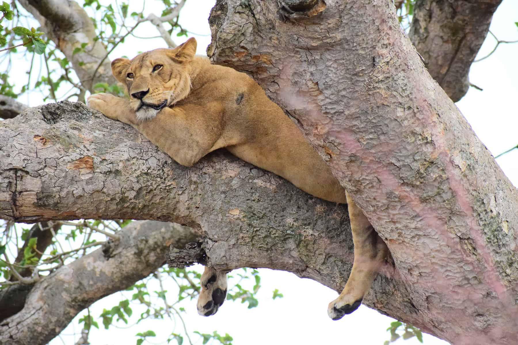 wildlife photography uganda