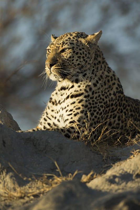 Photo Safari South Africa