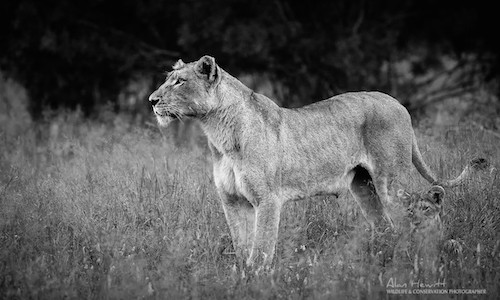 Kruger Wildlife Photography 1 - Tours