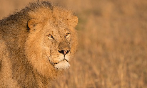 Maasai Mara Wildlife - Our Workshops