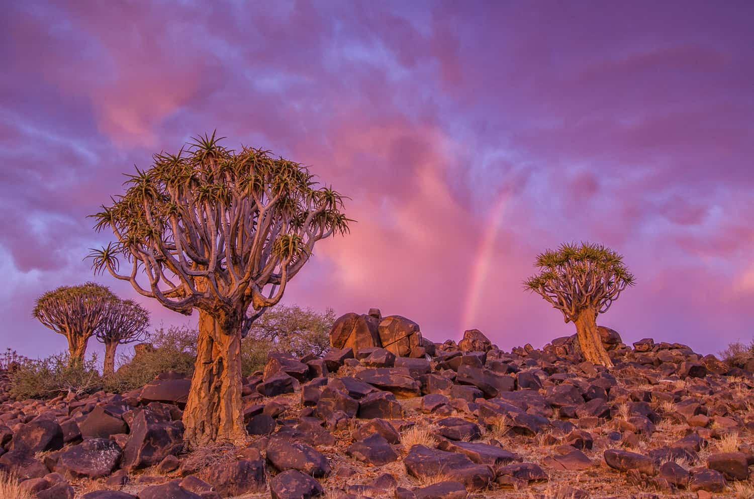 Namibia Landscape Photography7 - Capturing Space: Our Photography Workshop in Namibia
