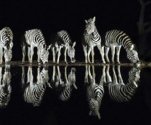 South Africa Photo Safari