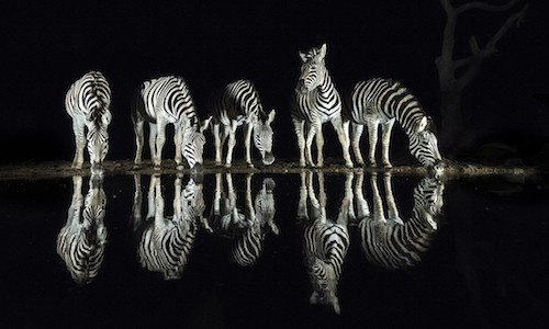 photo safari in South Africa