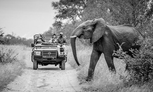 Wildlife and Photography Conservation - Wildlife Photography Tours