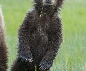 brown-bear-photography-workshop1