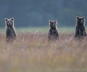 brown-bear-photography-workshop11