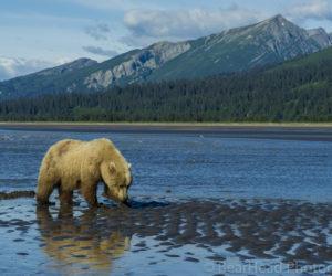 brown-bear-photography-workshop2