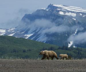 brown-bear-photography-workshop4