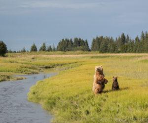 brown-bear-photography-workshop9