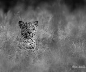 kruger-wildlife-photography11