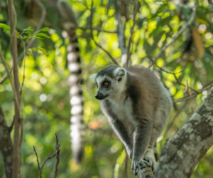 madagascar-photography-workshop12