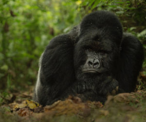 gorilla photography workshop