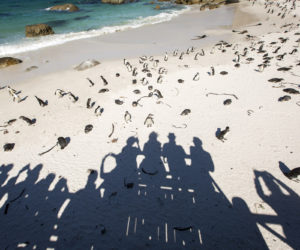 ngo-academic-summer-course-cape-town7