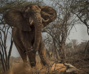 south-africa-photo-safari10