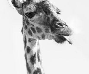 south-africa-photo-safari11