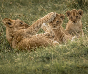 south-africa-photo-safari12