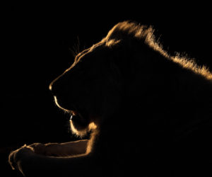 south-africa-photo-safari5