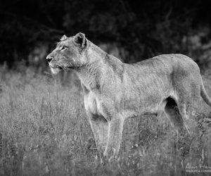 Kruger Wildlife Photography