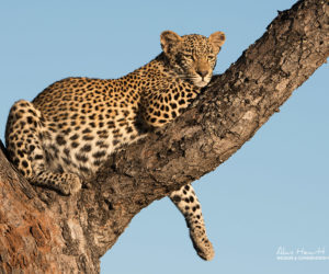 botswana-south-africa-photo-safari9
