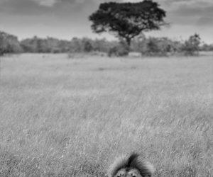 kruger-wildlife-photography12