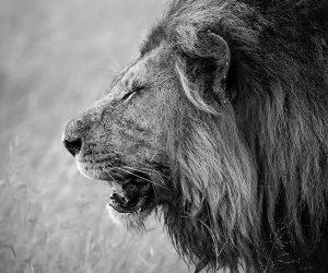 kruger-wildlife-photography13