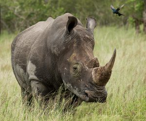 kruger-wildlife-photography17
