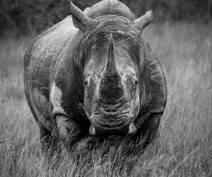 kruger-wildlife-photography18