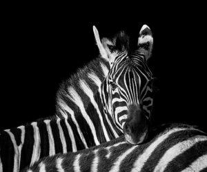 kruger-wildlife-photography21