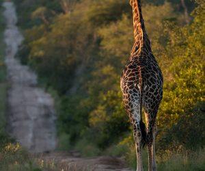 kruger-wildlife-photography5