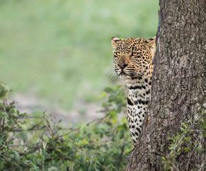 kruger-wildlife-photography9