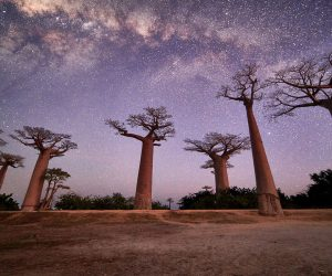 madagascar-photography-tour-main