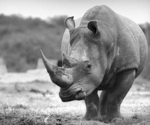 South African Photo Safari