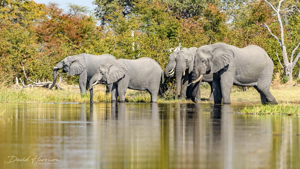 African photo safari elephants