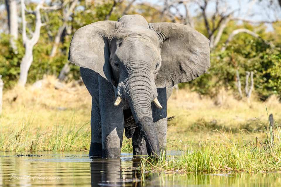 African photo safari in Botswana