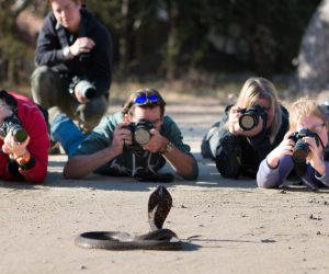 wildlife photography workshop