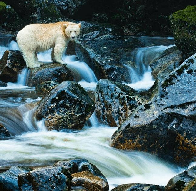 wildlife photography Instagram accounts
